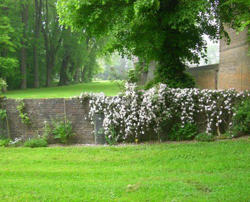 Clématites et perspectives Château et jardins de Bretteville DR