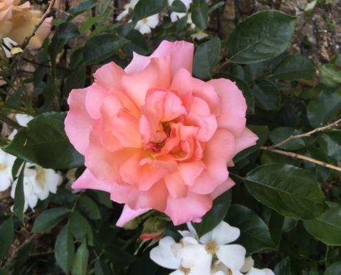 Rose Marchesa De Urquijo